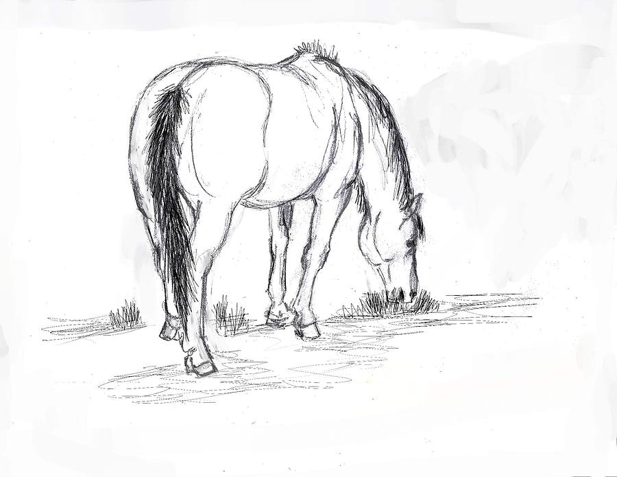 Horse Drawing - Mustang Mare Field Sketch by Dawn Senior-Trask