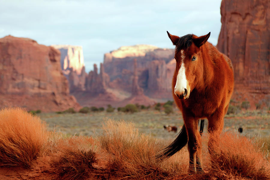 Mustang by Nicholas Blackwell
