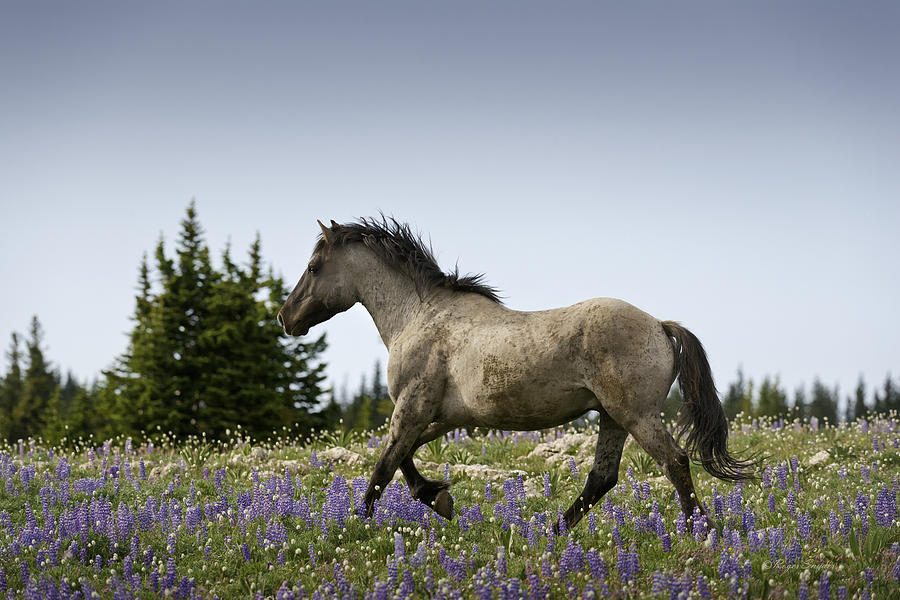 Beautiful Photos Photograph - Mustang Running 2 by Roger Snyder