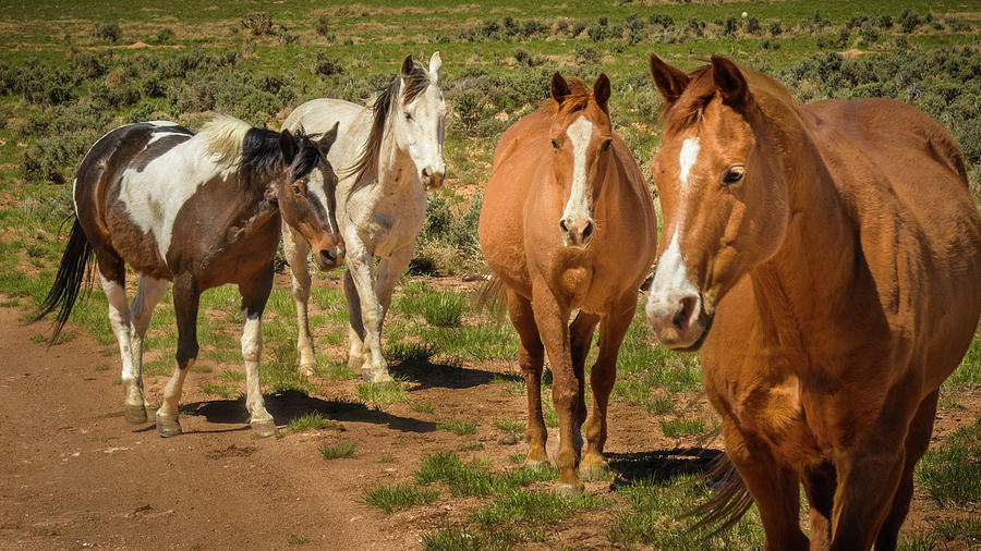 Mustangs On The Range Photograph