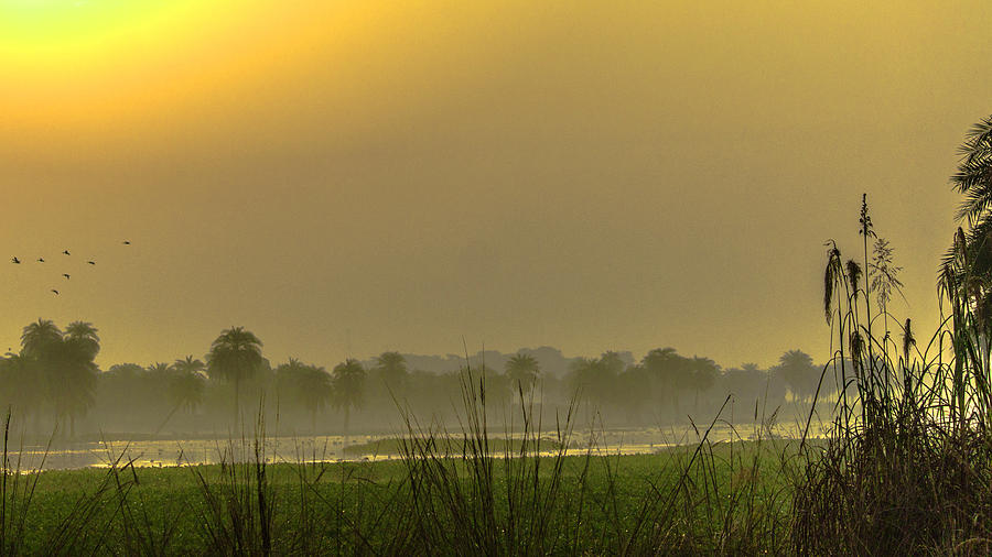 Mustard Haze Photograph