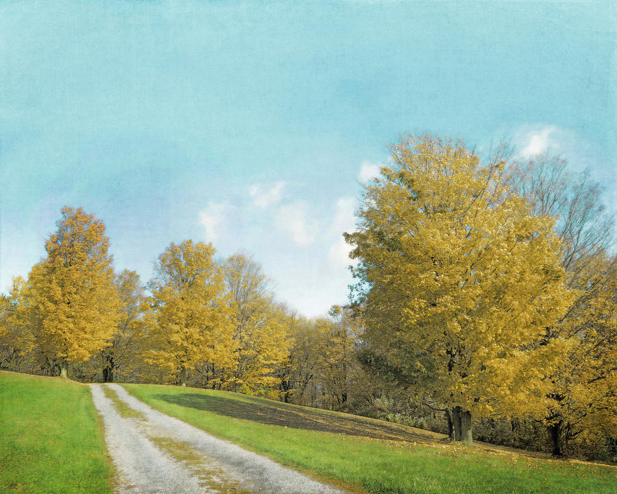 Autumn Landscape Photograph - Mustard Yellow Trees And Landscape by Brooke T Ryan