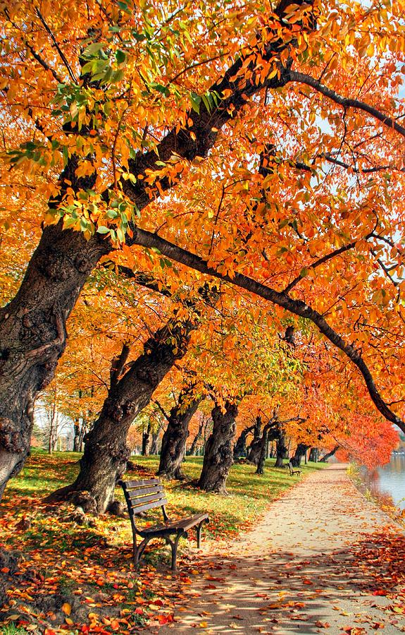 Autumn Photograph - Mute Appeal by Mitch Cat