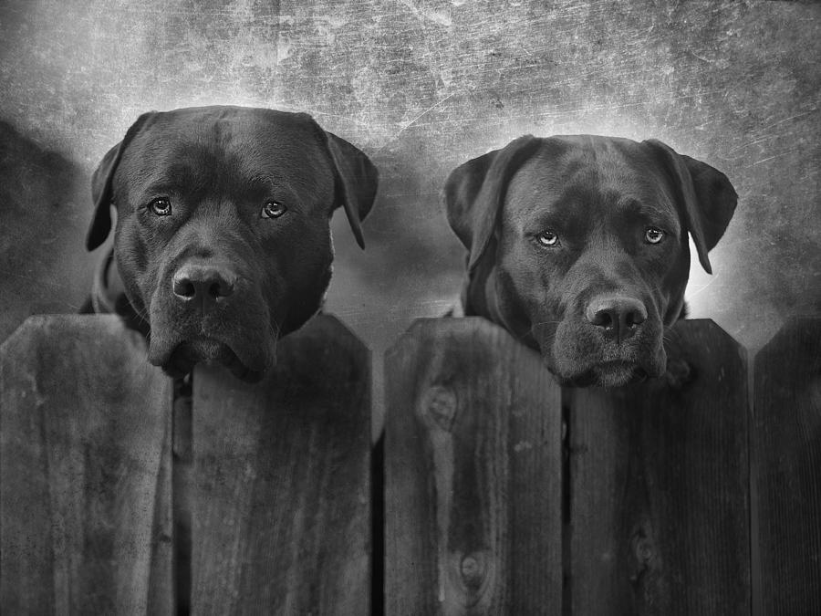 Dog Photograph - Mutt And Jeff by Larry Marshall