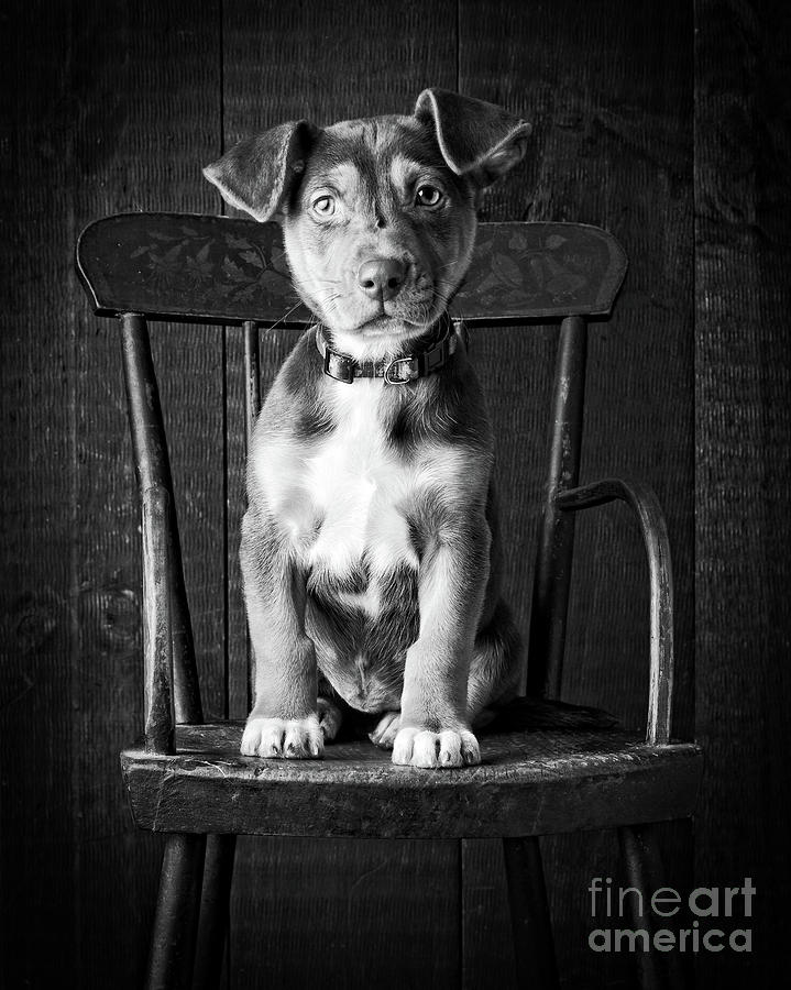 Mutt Black and White by Edward Fielding