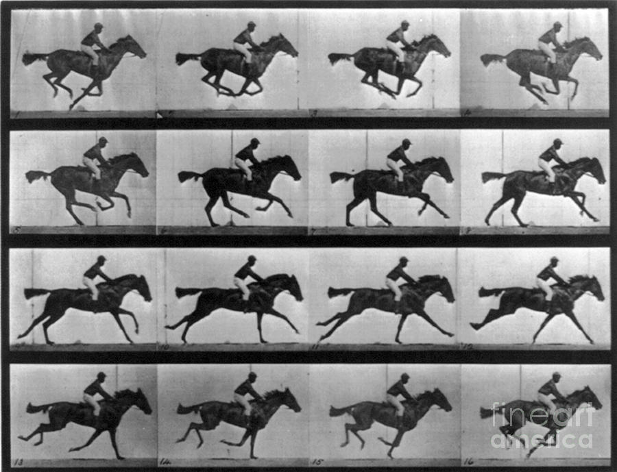Well-known Photograph - Muybridge Locomotion Racehorse by Photo Researchers
