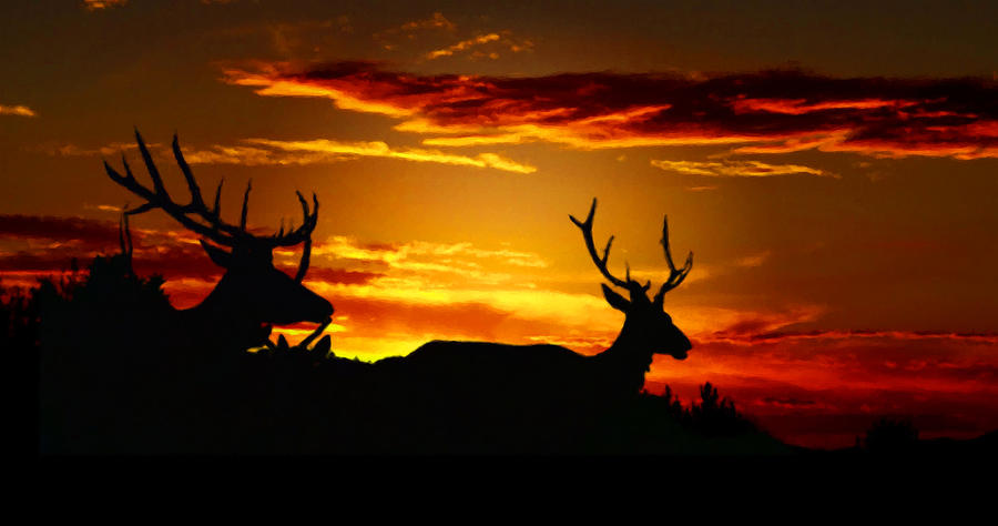Elk Sunset Photograph