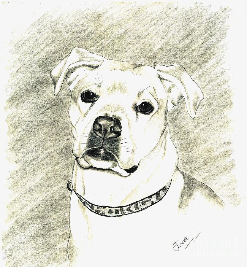 Pet Portrait Drawing - My Bella by Joette Snyder