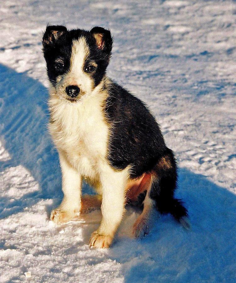 Dog Photograph - My Best Friend by Juergen Weiss