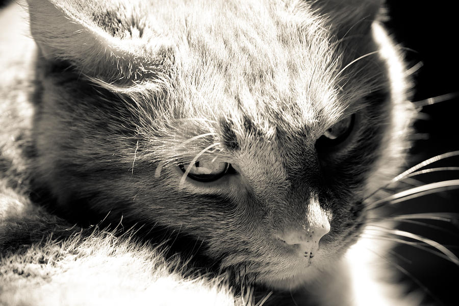 Cat Photograph - My Buddy by Edward Myers