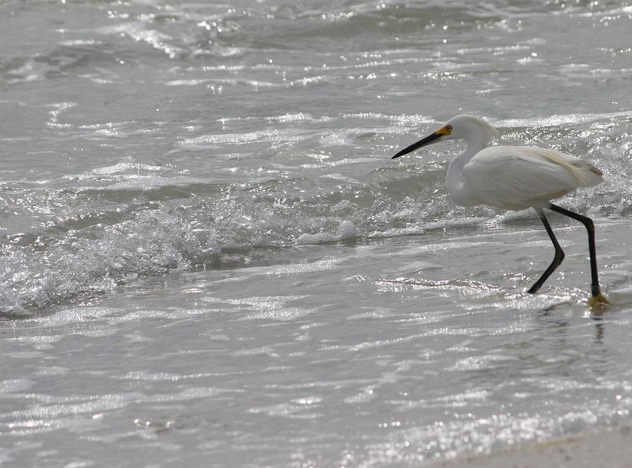 Bird Photograph - My Buddy Elroy by Morgann Hext