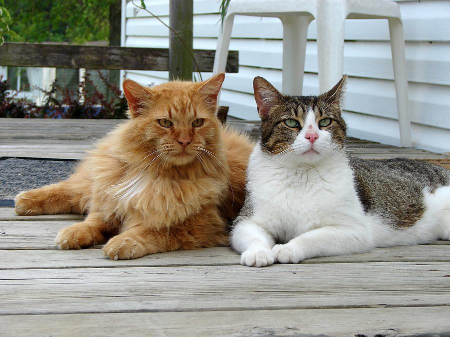 Cats Photograph - My Buds by J R   Seymour