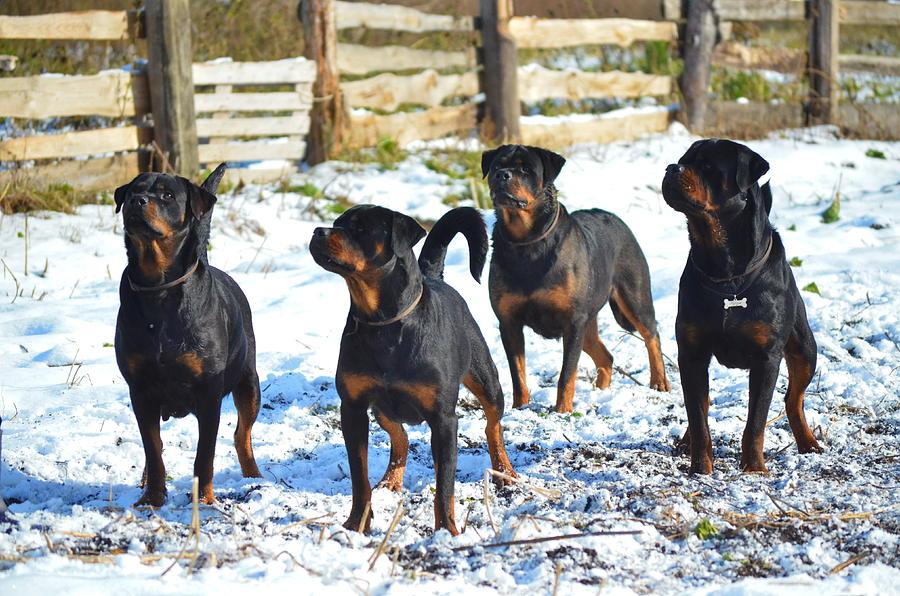 Winter Photograph - My Dog by Maria Kozmina