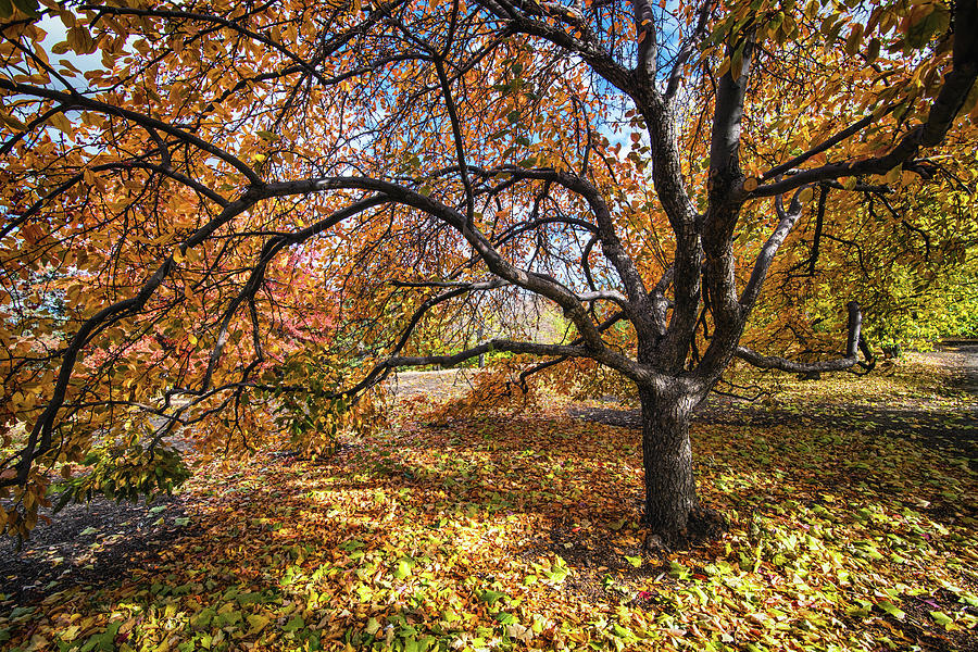 My Favorite Tree, Fall 2017 by Janis Knight