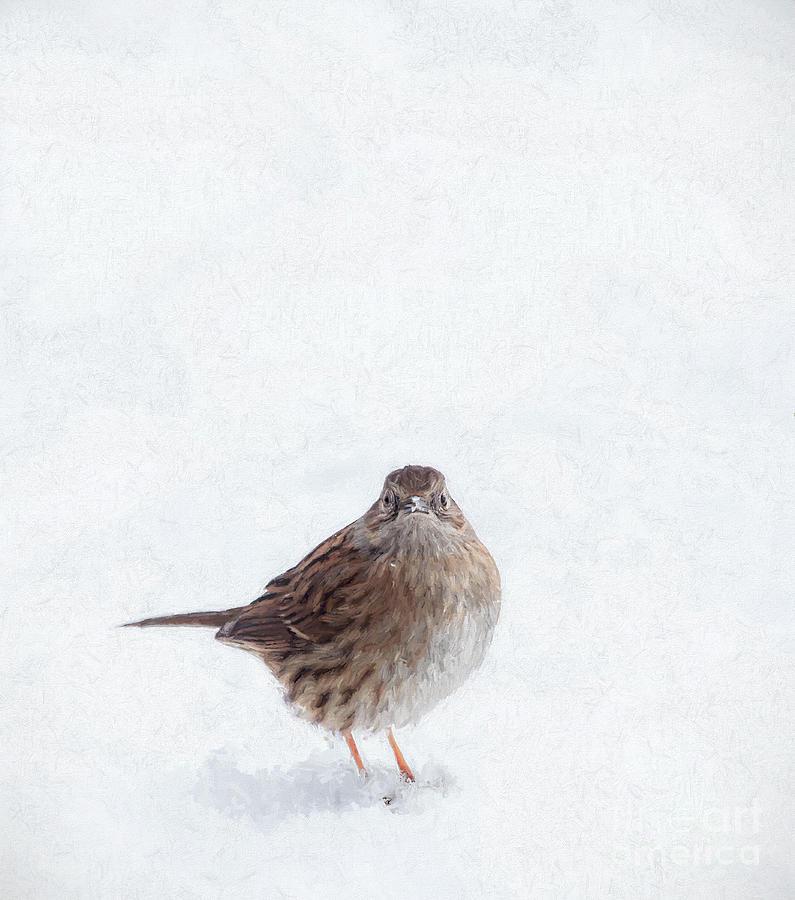 My Feet are Freezing by Liz Leyden