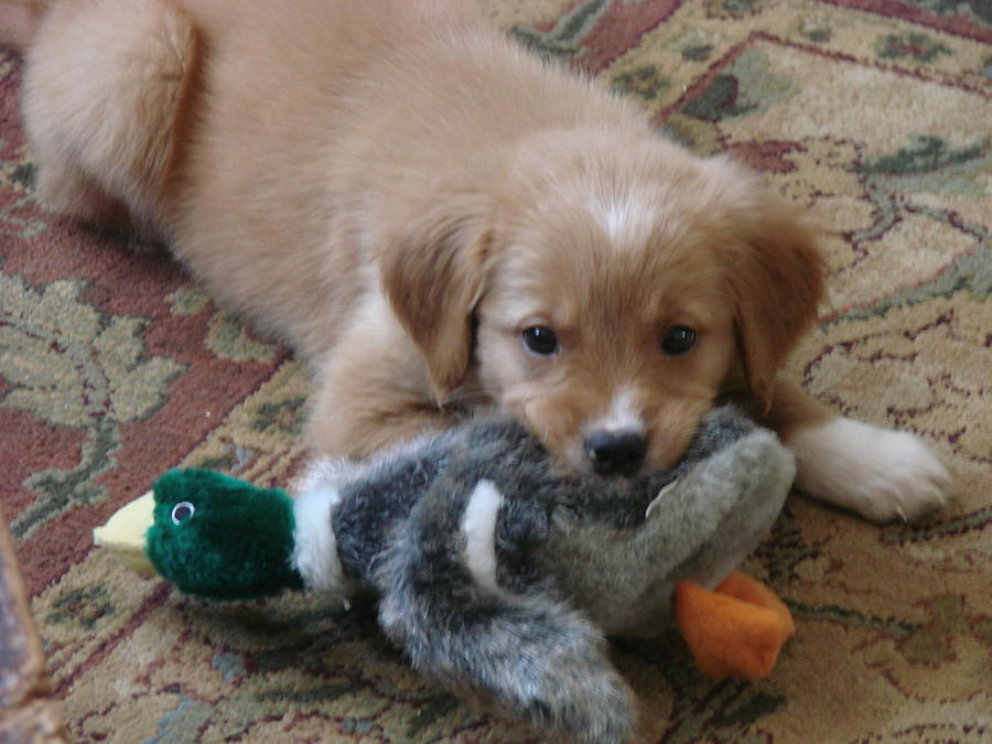 Dog Photograph - My First Duck by Wayne Whitney