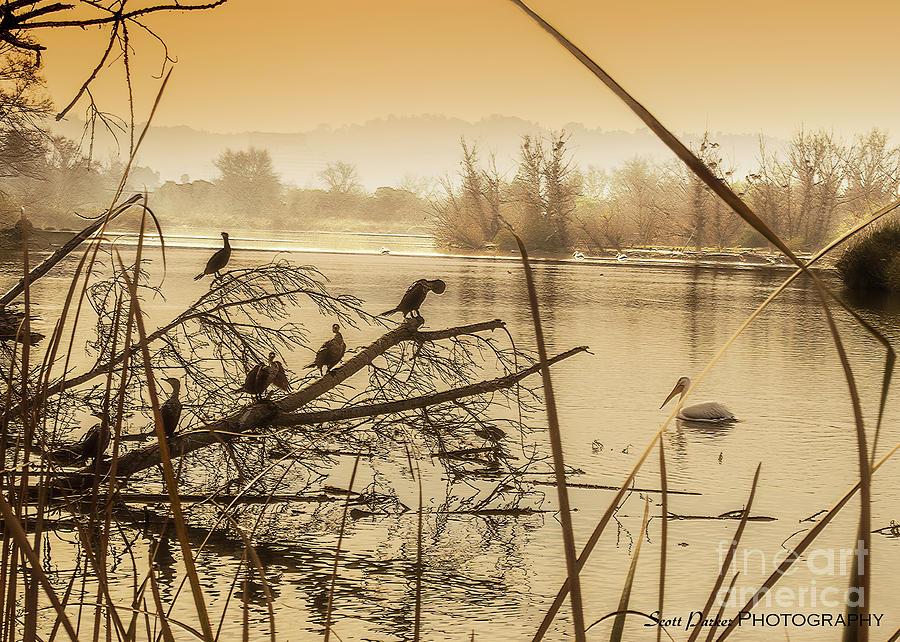 My Golden Pond 2 by Scott Parker