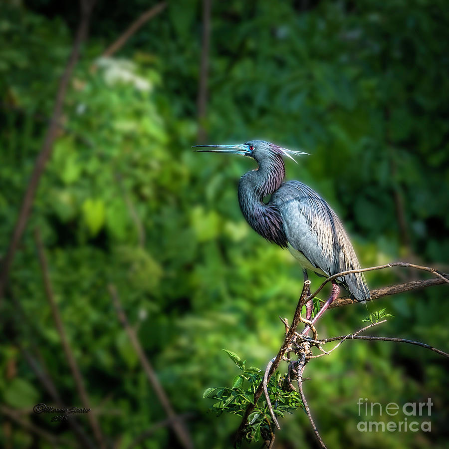 Bird Photograph - My Good Side by Marvin Spates