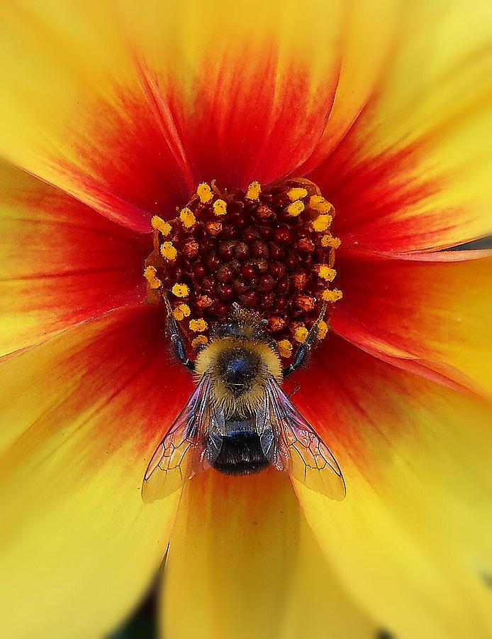 My Honey Bee by Bart Blumberg