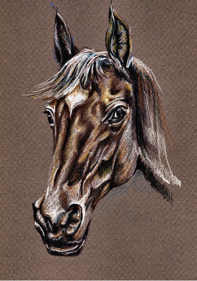 My Horse Portrait Drawing by Daliana Pacuraru