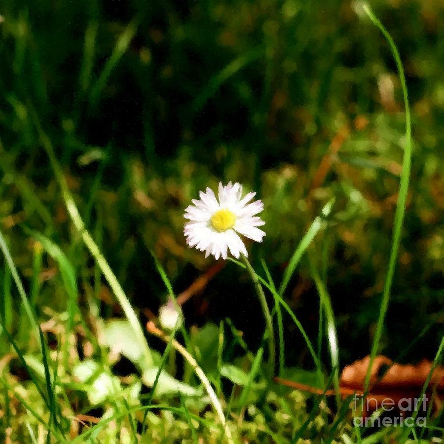 Daisy Mixed Media - My Little Daisy by Abbie Shores