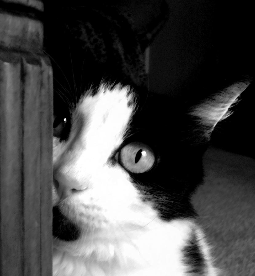 Black And White Photograph - My Moo by Holly Ethan