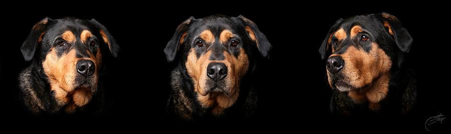 Rottweiler Photograph - My Mutt by Geerah Baden-Karamally
