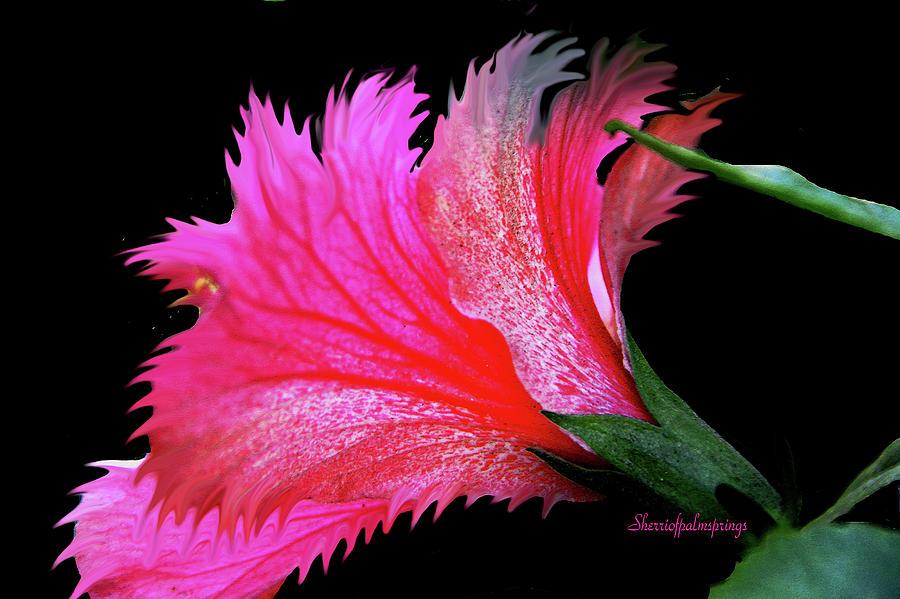 Flower Digital Art - Palm Springs Flower My Name Is Wow by Sherris - Of Palm Springs