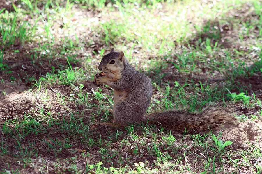 My nut by Evelyn Patrick