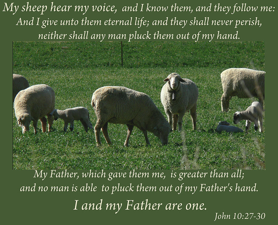 Image result for my sheep know my voice kjv