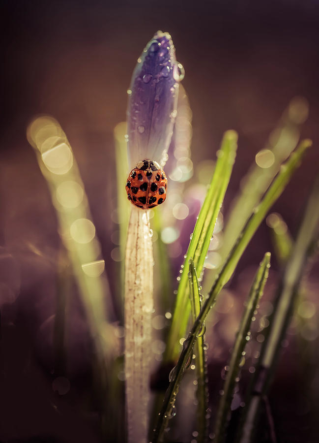 Bug Photograph - My Small Garden In The Morning Rain by Jaroslaw Blaminsky
