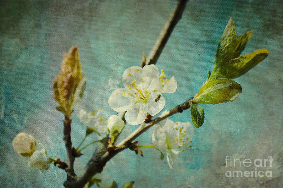 Spring Photograph - My Springtime by Angela Doelling AD DESIGN Photo and PhotoArt