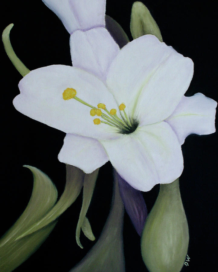 Lily Painting - My White Lily by Mary Gaines