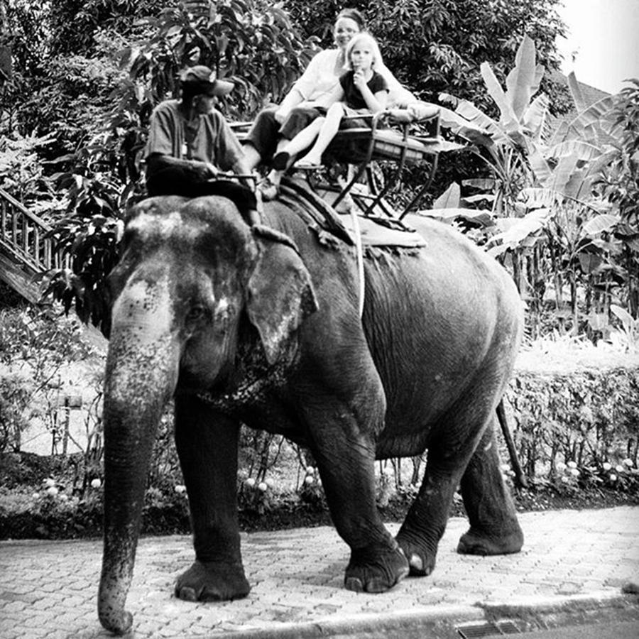 Missionaries Photograph - Mya & Donna Ride An Elephant In Thailand by Aleck Cartwright