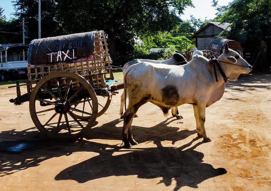 Myanmar Mass Transit  by Rochelle Sjolseth