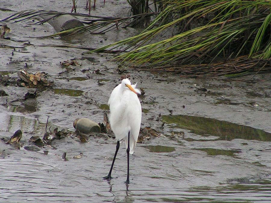 Photo Photograph - Myrtle Beach Bird by Tammy Gary