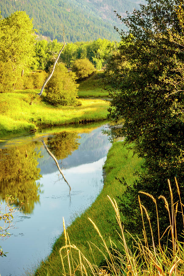 Myrtle Creek in August by Albert Seger