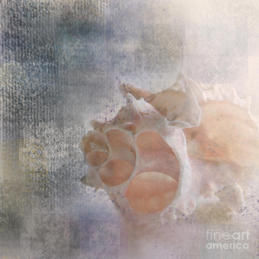Sea Shell Photograph - Mysterious by Betty LaRue