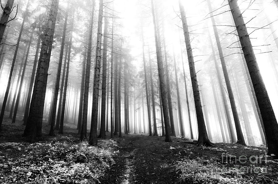 Bleak Photograph - Mysterious Forest by Michal Boubin