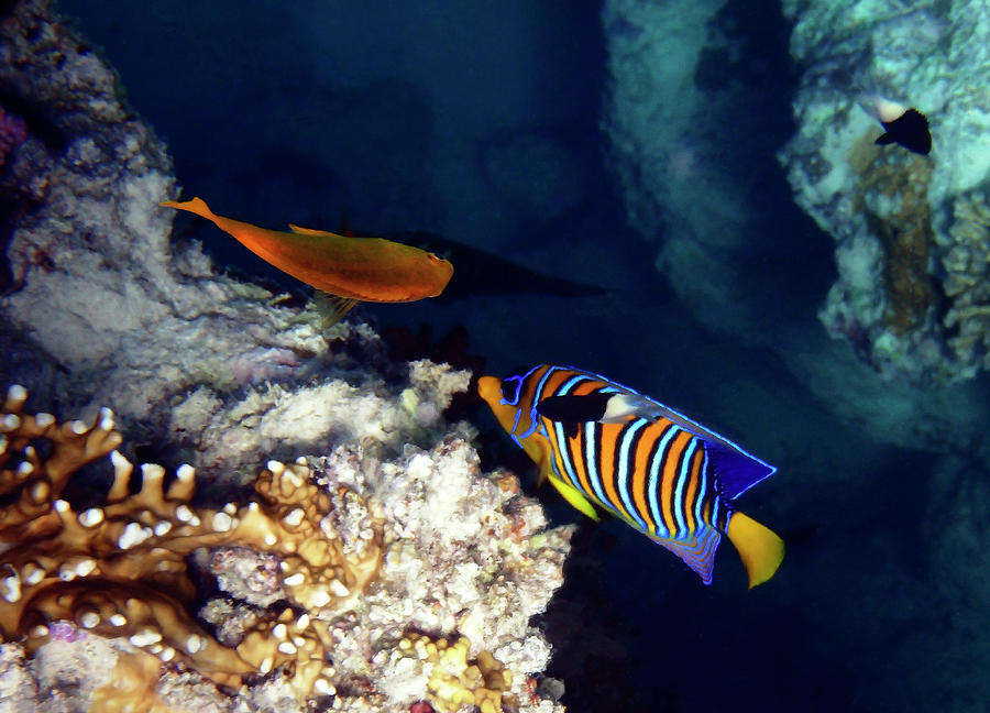 Mysterious Red Sea World 8 by Johanna Hurmerinta