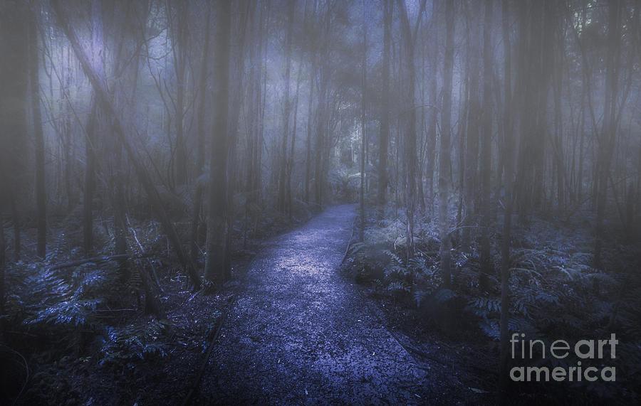 Dark Photograph - Mystery Pathway by Jorgo Photography - Wall Art Gallery