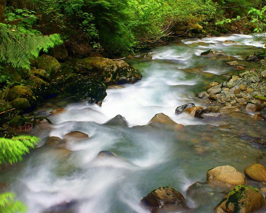 Creek Photograph - Mystic Creek by Marty Koch