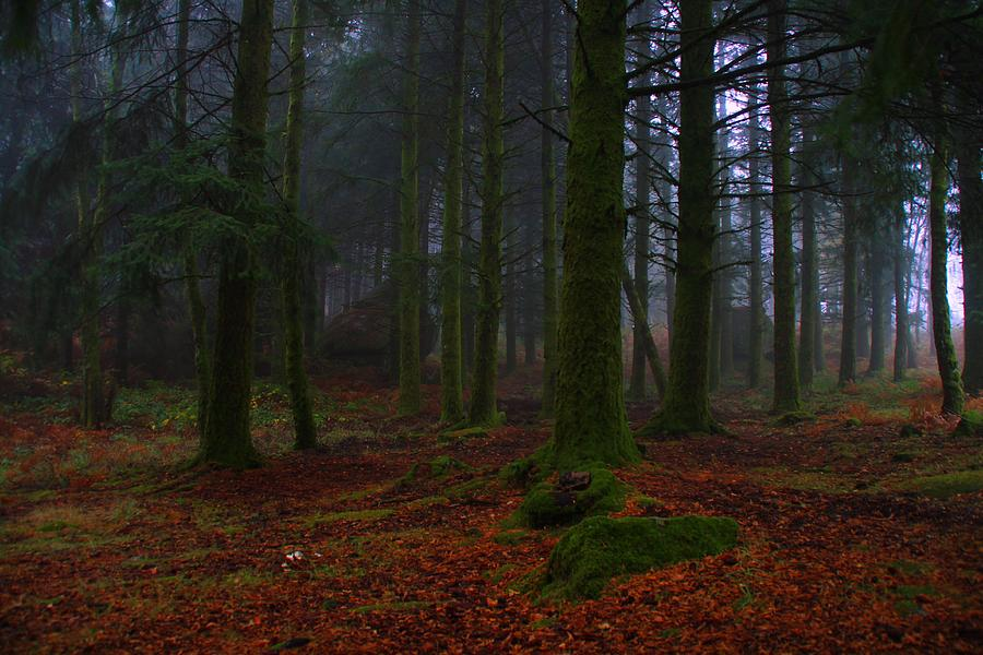 Enchanted Forest Photograph - Mystic Forest by Paulo Antunes