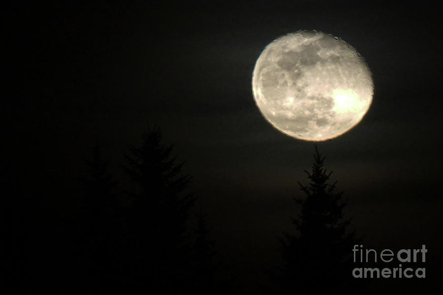 Mystic Moon by Timothy Lane