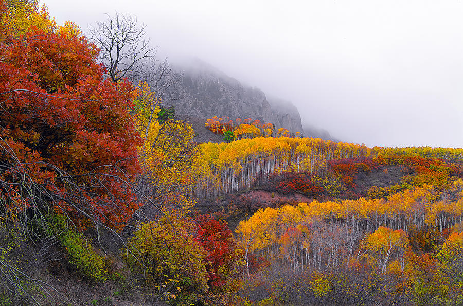 Fall Photograph - Mystic by Tim Reaves