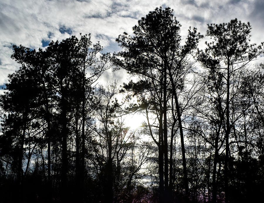Mystic Wilderness by Jason Denis