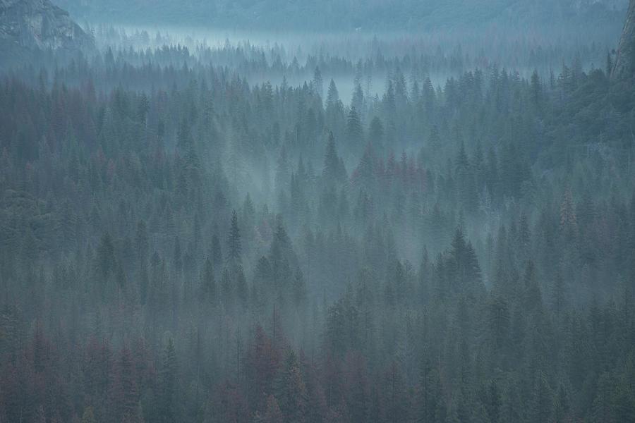 Mystical Forest by Ken Dietz