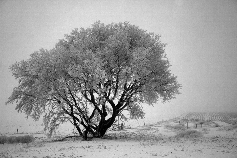 Snow Photograph - Mystical Morning by Julie Lueders
