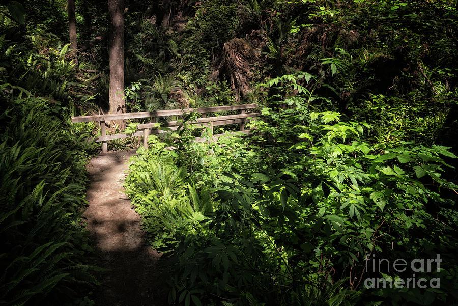 N5 Bridge On North Creek Trail by Al Andersen