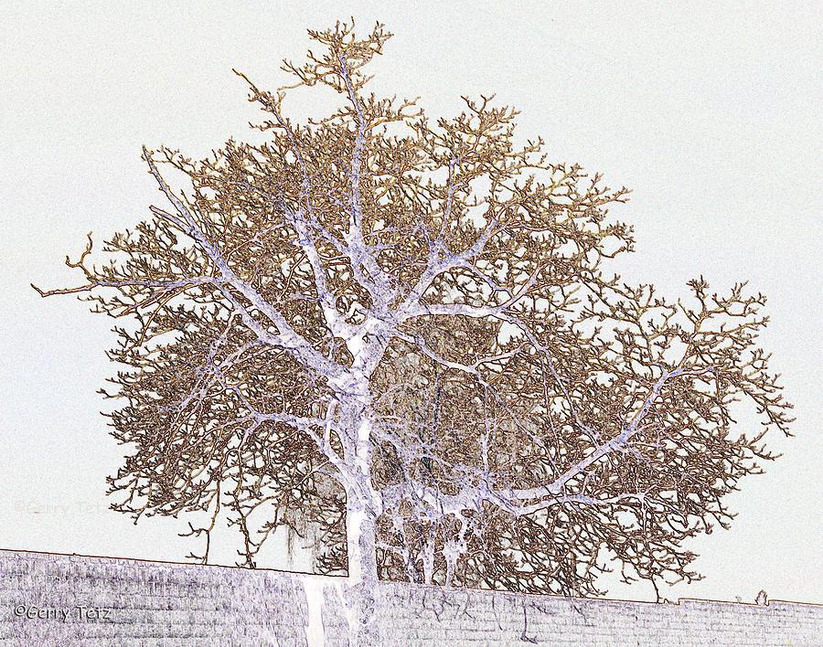 Tree Photograph - Naked Limbs by Gerry Tetz